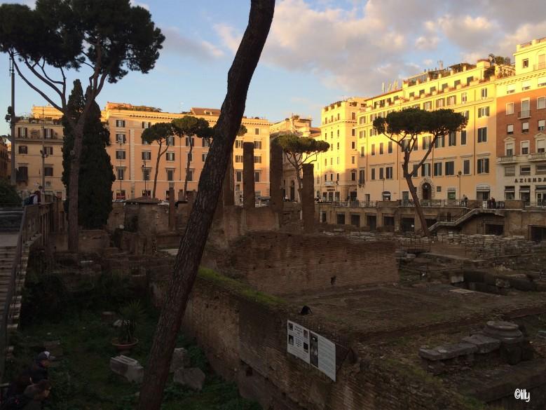 Rome_Torre Argentina