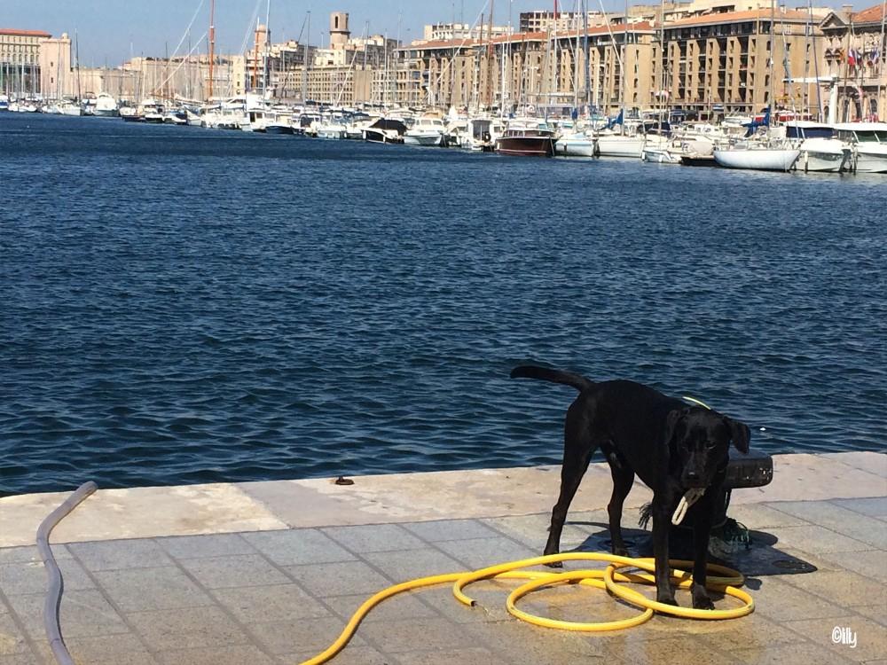 Marseille3_lespetitsvoyagesdelilly