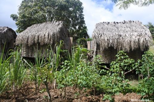Martinique_Savane des Esclaves7©lespetitsvoyagesdelilly